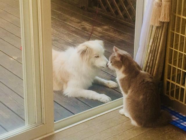 在感到疲憊的時候藉著看看房間裡的寵物得到療癒